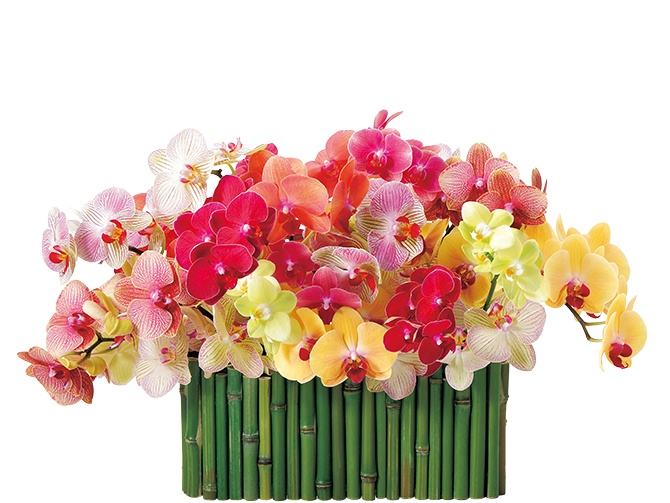 家庭画報表紙の花