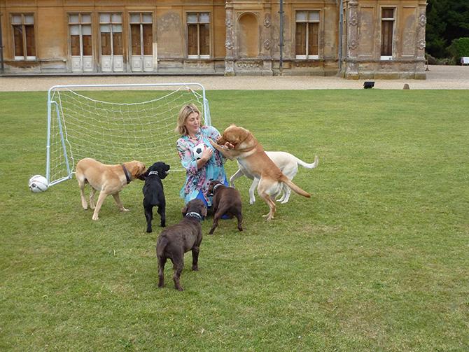 ハイクレア城の犬