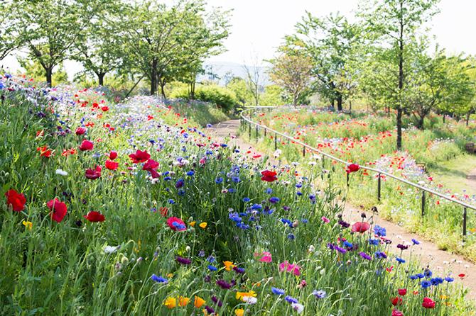花菜ガーデンのパノラマ大花壇