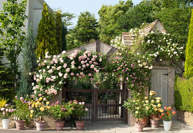 ガーデニングミュージアム 花遊庭に咲くバラのアーチ