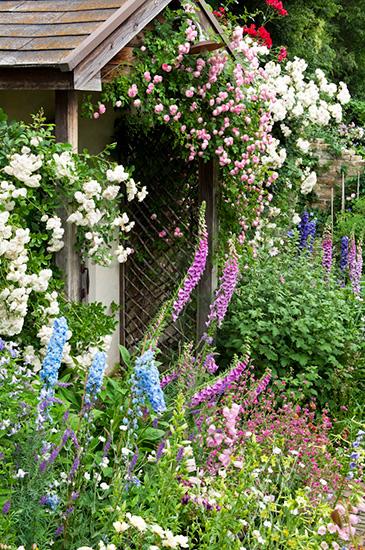 庭に咲くジギタリスやデルフィニウム