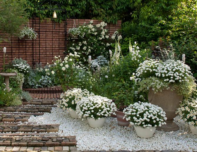 イングリッシュホワイトガーデンに咲く白いバラ