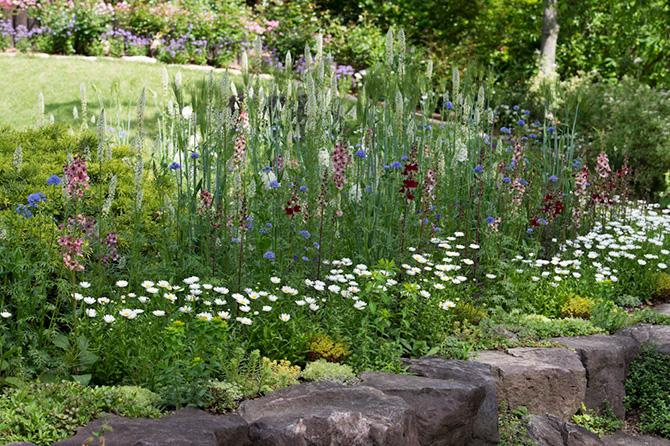 庭に咲くバーバスカムやベロニカ