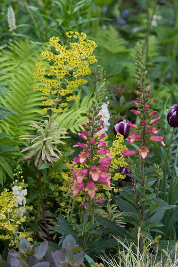 ジギタリスのイルミネーションという品種の花
