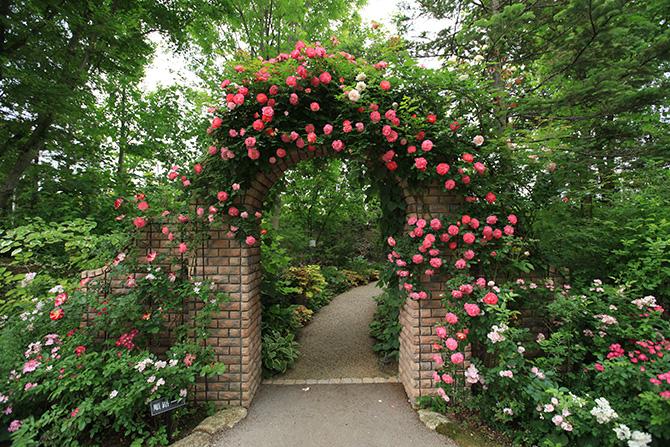 濃淡ピンクのバラが絡まるストーンアーチ