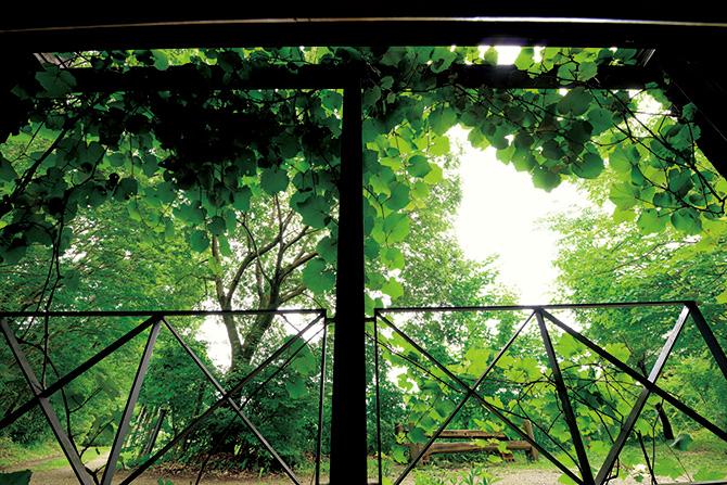 今森さんのアトリエと庭