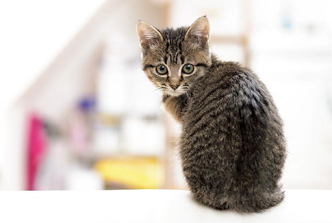 猫の健康と安全を守り、暮らしをより快適にする最新グッズ