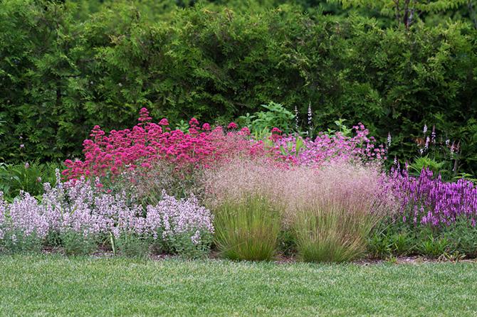 ミューレンベルギア カピラリスの花
