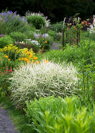 風のガーデンに咲く宿年草