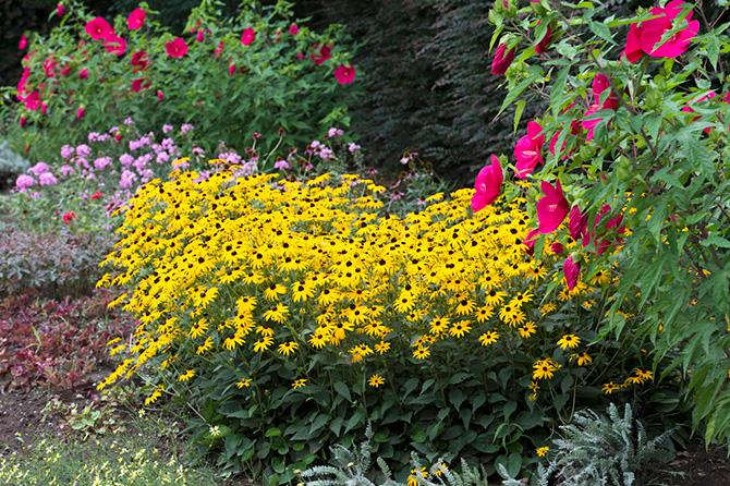 アンディ&ウィリアムス ボタニックガーデンに咲くルドベキア