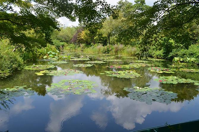 北川村モネの庭マルモッタンの池とスイレン