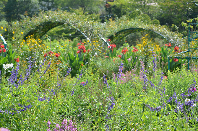 高知県北川村モネの庭マルモッタンの花の庭に咲く花々