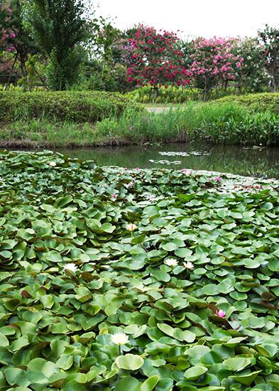 温帯スイレンが咲く「尾根見の池」
