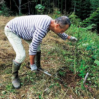 今森光彦さん、農家になる。カラスザンショウの木