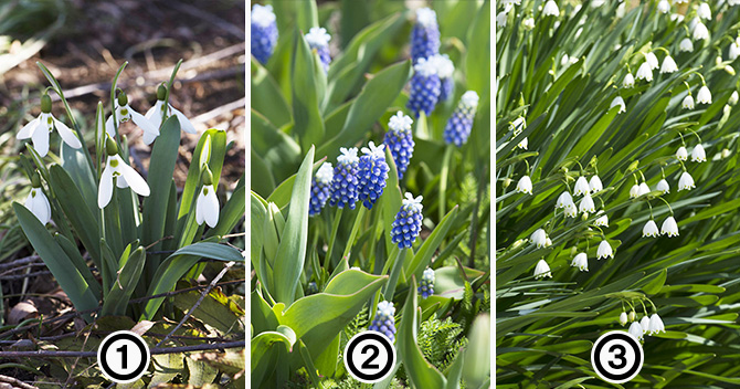 大人検定365 「スズランスイセン」という素敵な和名をもつ花はどれ?
