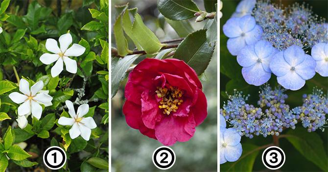 大人検定365 4月8日は花祭り。「甘茶」の材料は3つのうちのどれ?