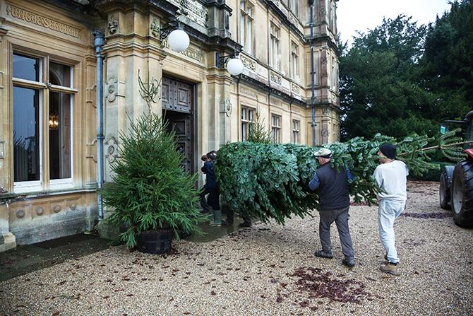 ハイクレア城に運ばれるモミの木