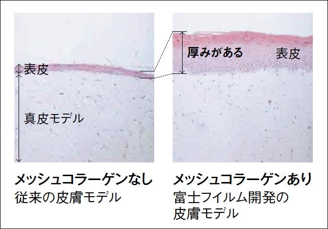 先端技術で若々しい皮膚を再現