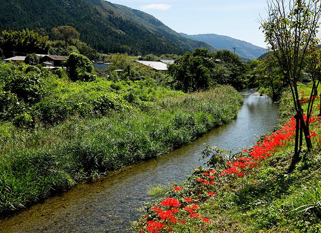 随筆家 大村しげの記憶を辿って 私だけの京都へ 第22回「志ば久」