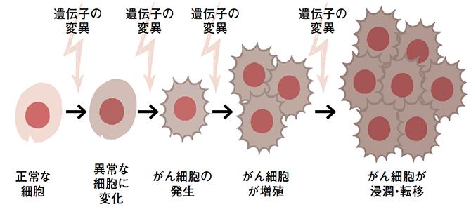 遺伝子の異常 がん細胞 図