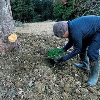 今森光彦さん、農家になる。冬の仕事のはじまり