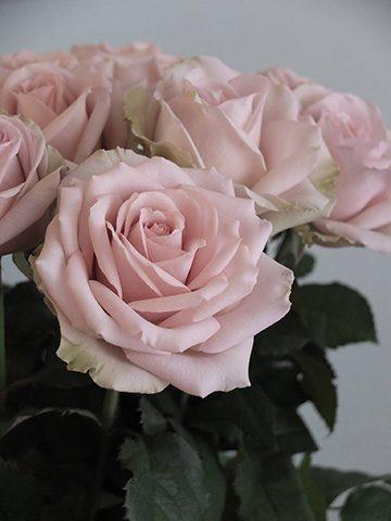 7月11日の贈り花