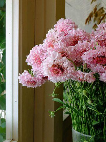 7月21日の贈り花