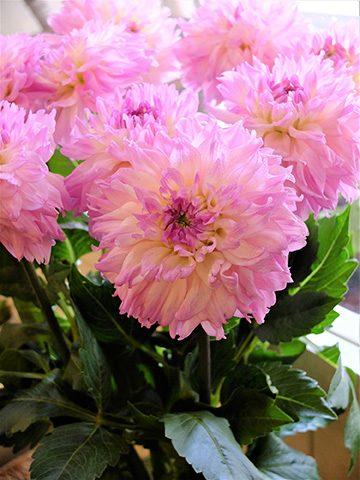 7月24日の贈り花