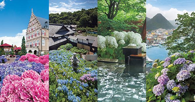 紫陽花に出逢う旅 ハウステンボス、下田公園、白檀、小樽貴賓館