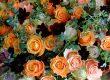 10月16日の贈り花