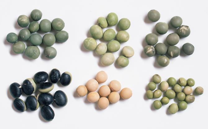 6種類の大豆
