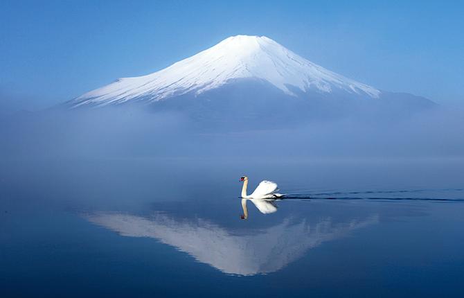 白鳥が見られる山中湖