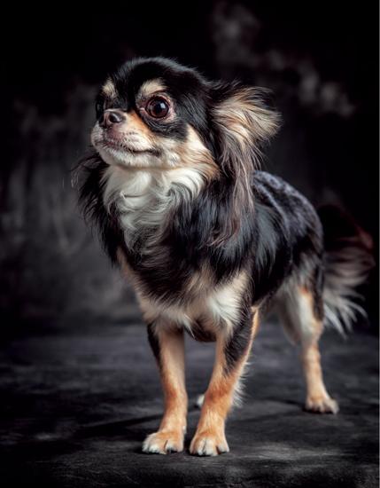 愛犬の写真