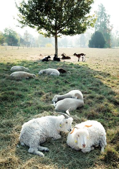 現在も敷地内にヤギやヒツジが飼われている。