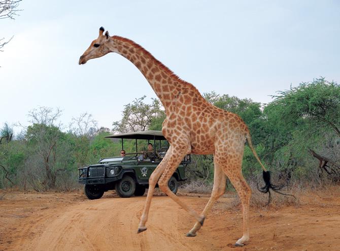 「南アフリカ 大地の力に感動する」旅