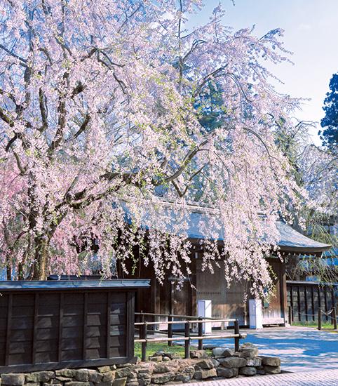 弘前公園と角館桜観賞3日間 東北随一の史跡と桜を巡る