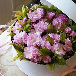 4月1日の贈り花