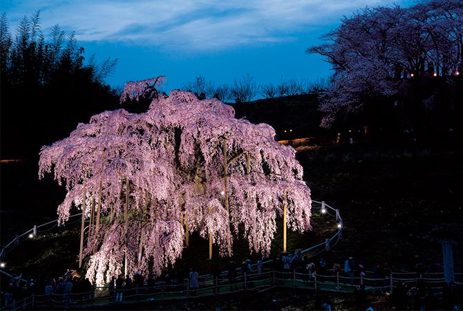 福島県三春町の三春滝桜