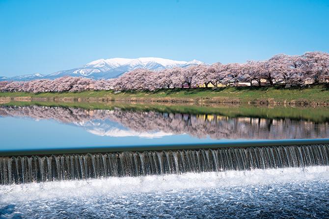 宮城県 白石川堤 一目千本桜
