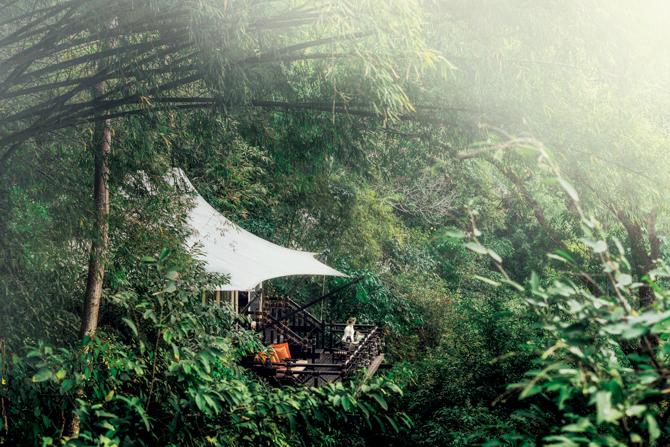 ジャングルグランピング