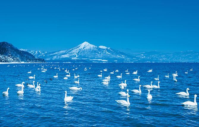 ふるさとの絶景【福島県】猪苗代湖の白鳥と磐梯山