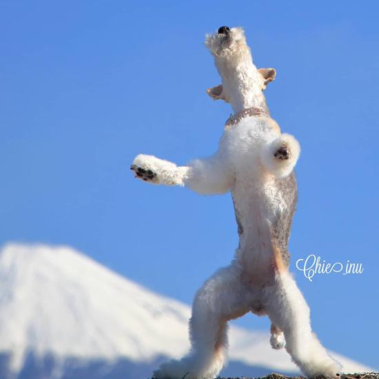 富士山に向かって元気にワン!〔#家庭画報ウチもふ365〕