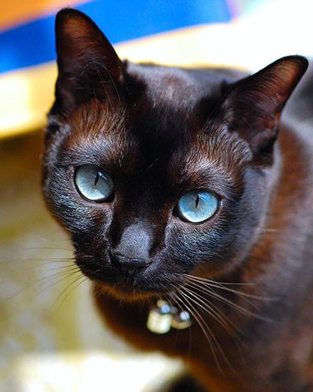 青い瞳に吸い込まれそう〔#家庭画報ウチもふ365〕