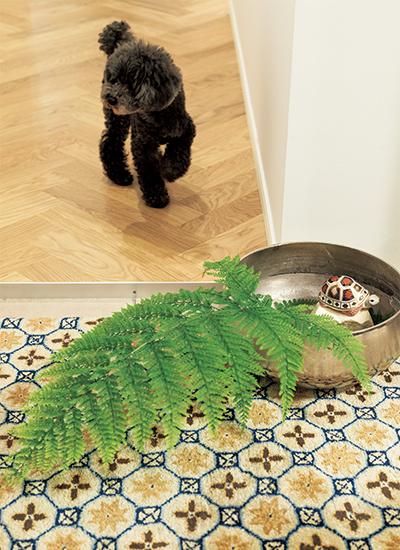 水盤を使って床置きする玄関の迎え花
