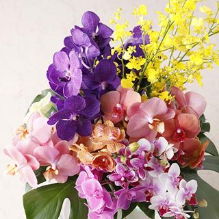 表紙の花が毎月届きます! 『家庭画報』の花 宅配便