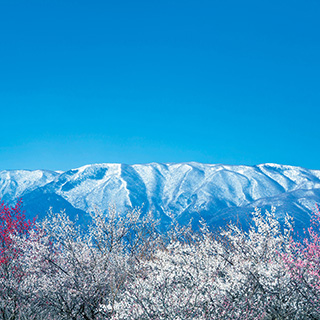 鈴鹿山脈-私の花の師