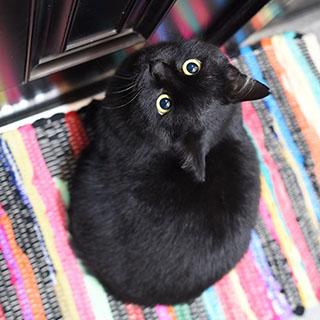 家猫修業中の頃の懐かしい1枚〔#家庭画報ウチもふ365〕