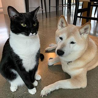 タキシード猫と柴犬の仲良しコンビ〔#家庭画報ウチもふ365〕