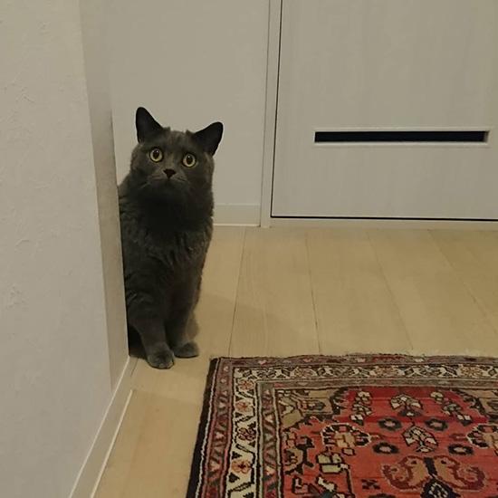 廊下の角にはいつも僕がいます〔#家庭画報ウチもふ365〕