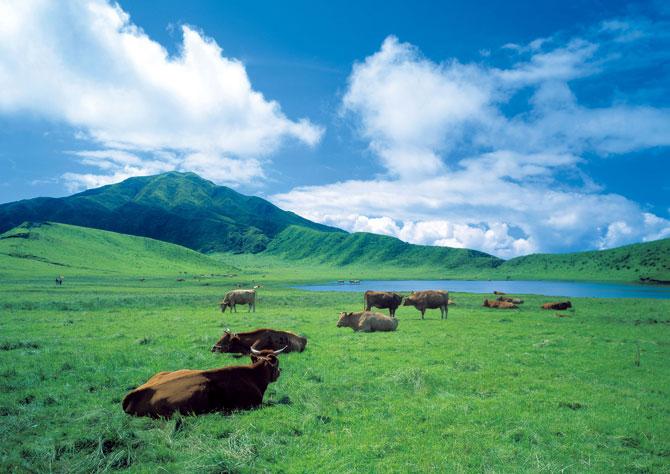 ふるさとの絶景【熊本県】阿蘇の草千里の夏ー真っ白な雲、そよぐ風